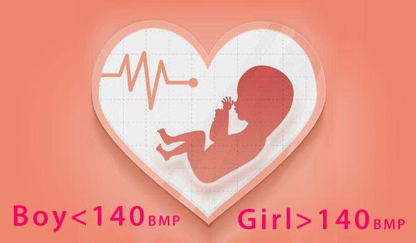 heart rate during pregnancy