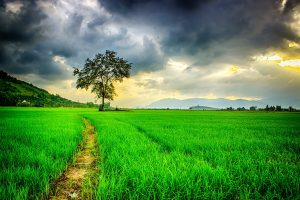 A grassy pathway