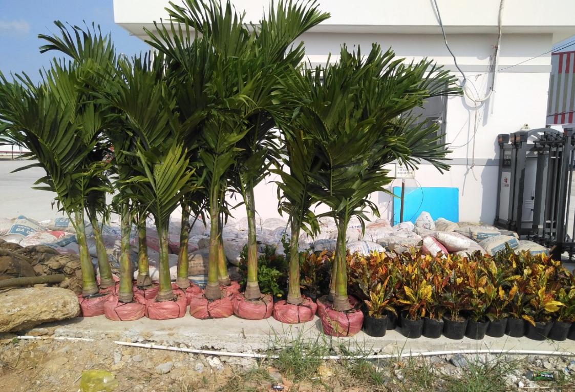 Chăm sóc cây cảnh để mang đến một môi trường làm việc lý tưởng