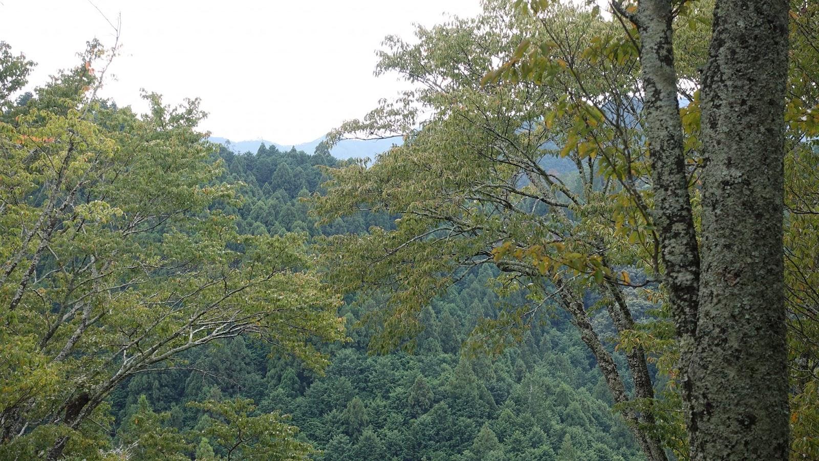 木、山、自然の画像のようです
