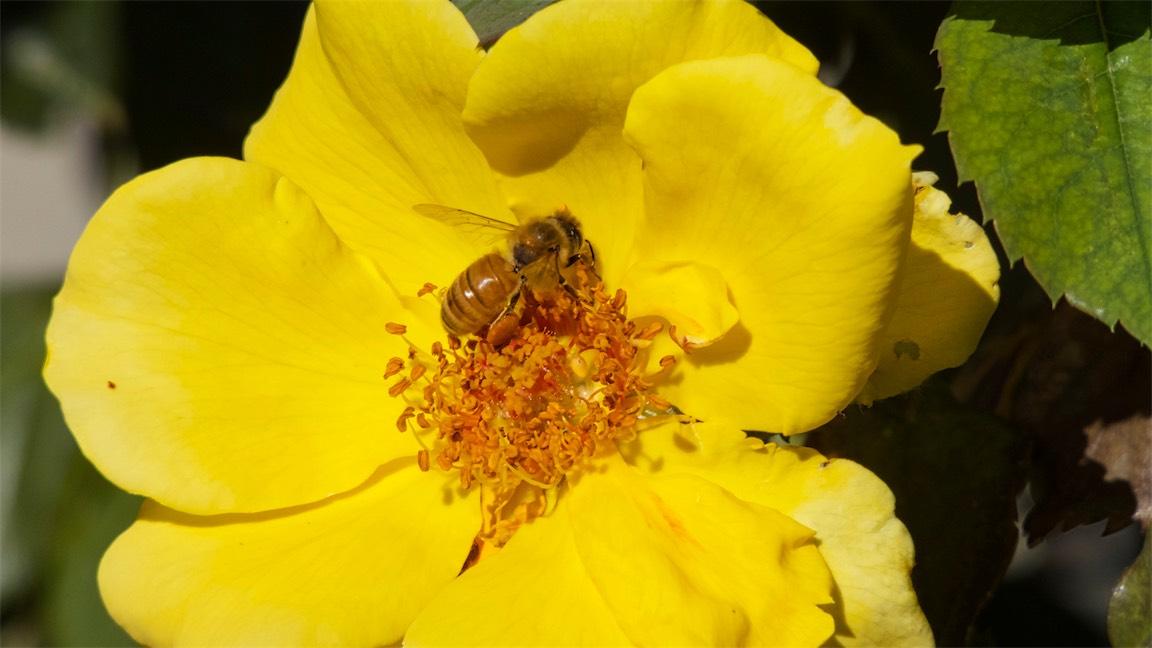 Loving That Nectar.jpg