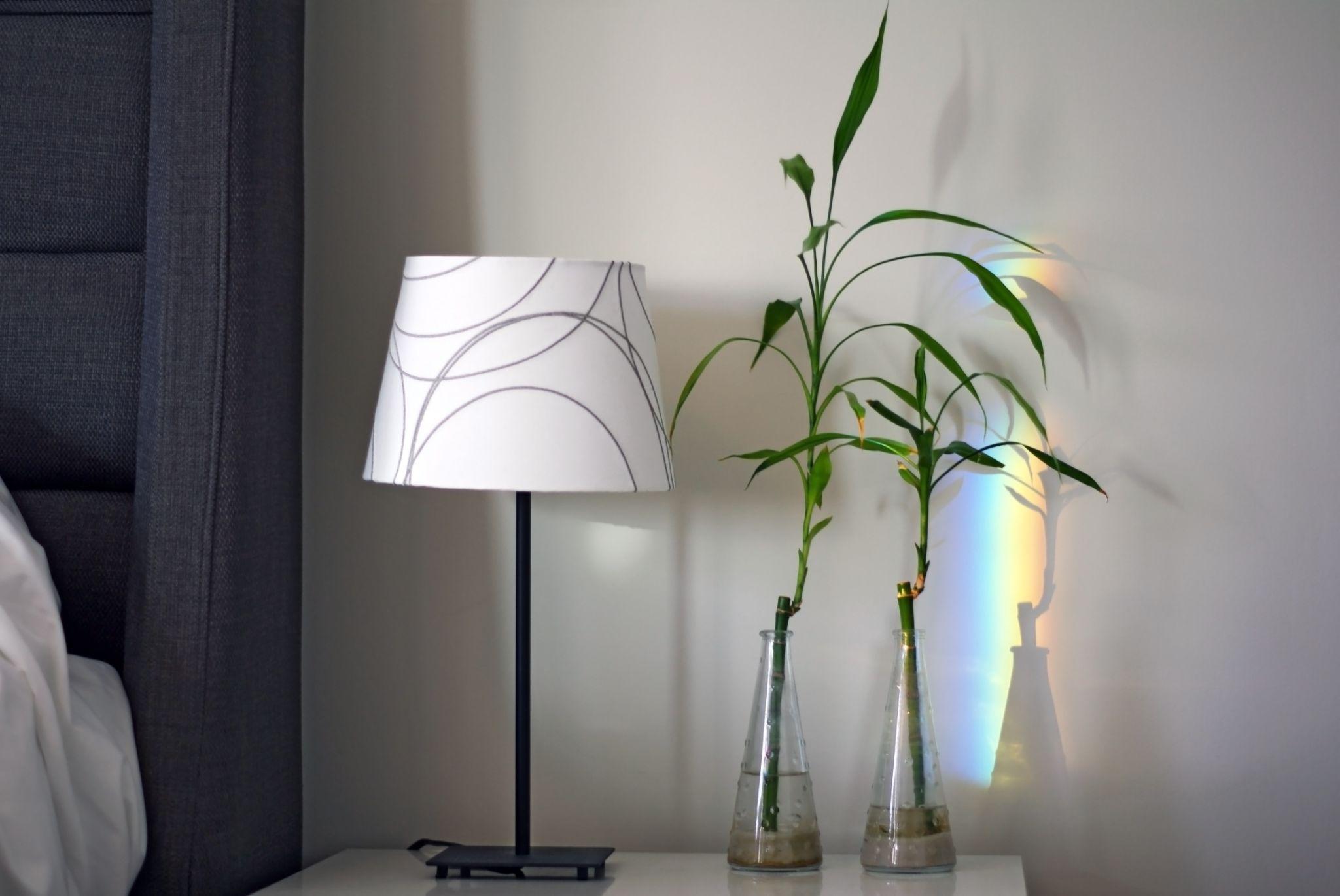 bambu da sorte no quarto