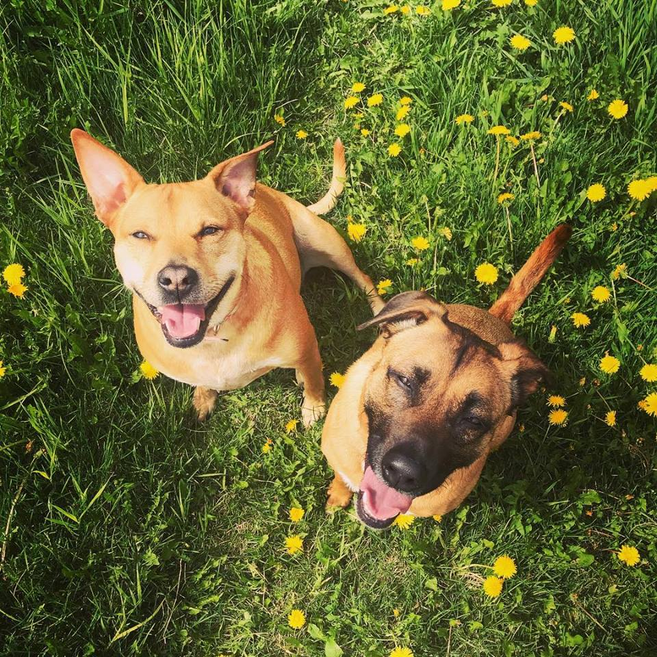 Roxy and Rico - How to Minimize Dog Shedding