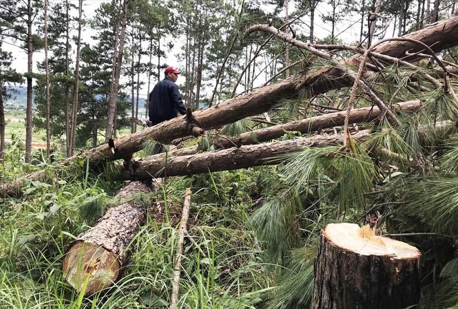 Lâm Đồng: 500 ha rừng biến mất, 'lọt' vào túi ai? - Ảnh 1