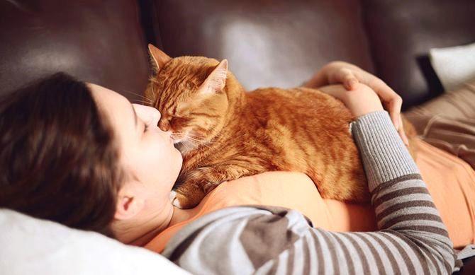 Warum liegt die Katze auf unserem Bauch