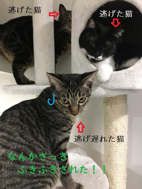 猫の消臭おすすめグッズと部屋の臭いを解決する掃除方法とは?スッキリ問題解決!