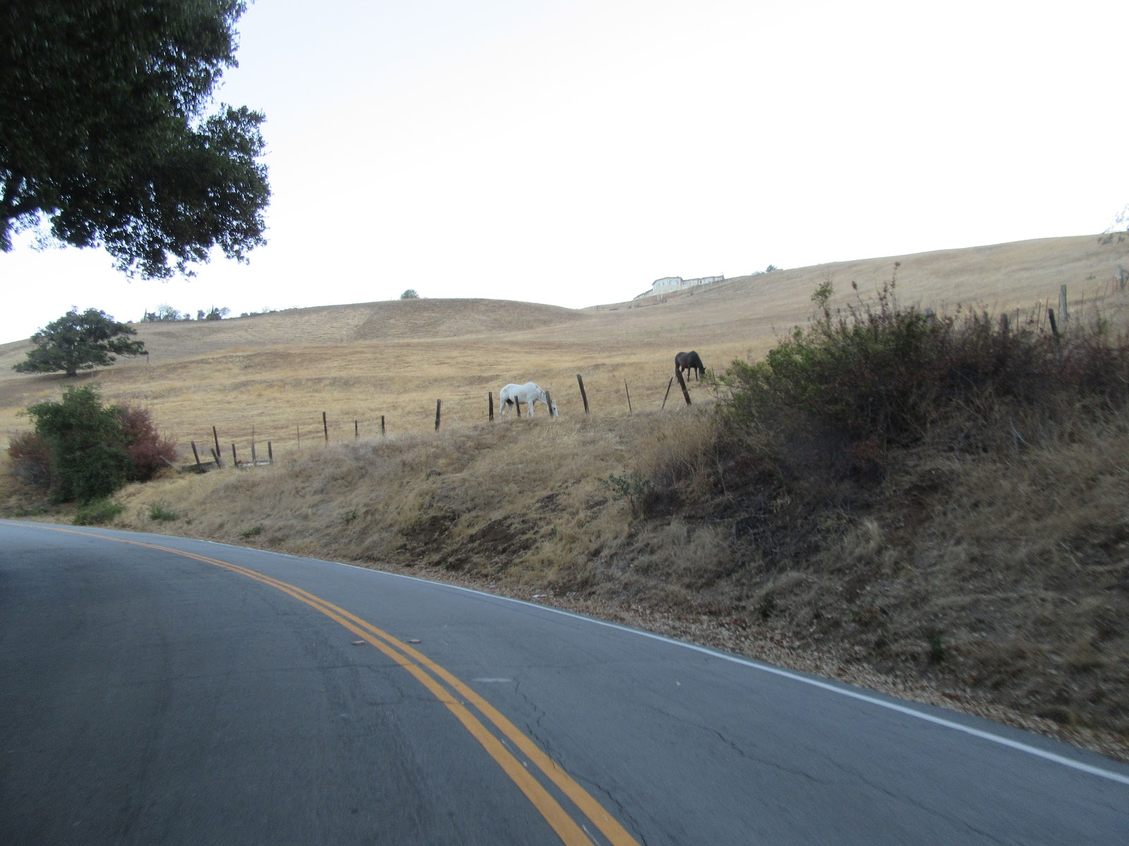 Bicycle climb of Quimby Road - horses and roadway, fields