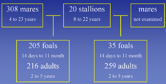 Horses used in the genetic study.
