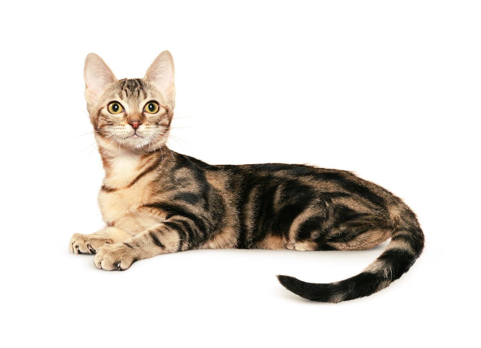 Как правильно следует ухаживать за пожилой кошкой