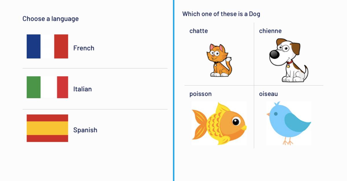 Bubble Duolingo UI design with no code