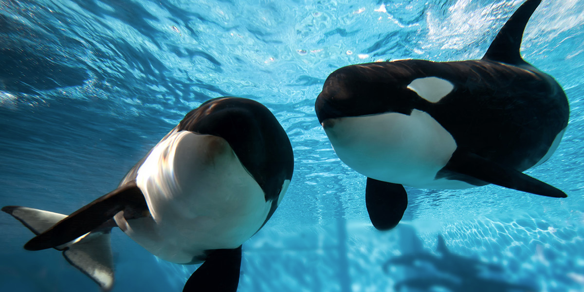 Something Wrong, I Hold My Head, Tilikum Gone, Our Friend Dead