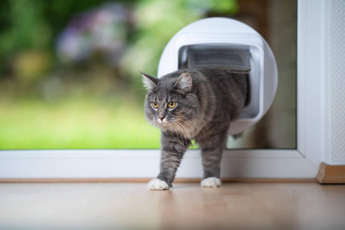 les chats d'extérieur n'ont pas la même notion d'espace