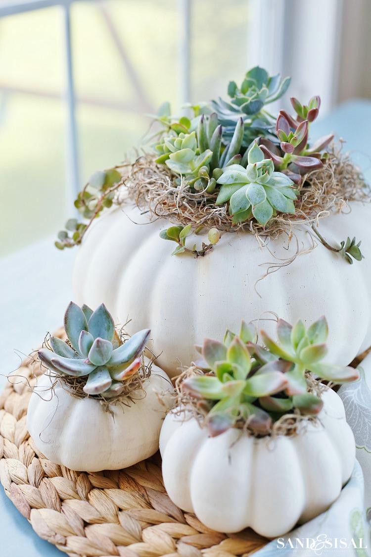 modern white succulent pumpkin fall decor sitting on white table