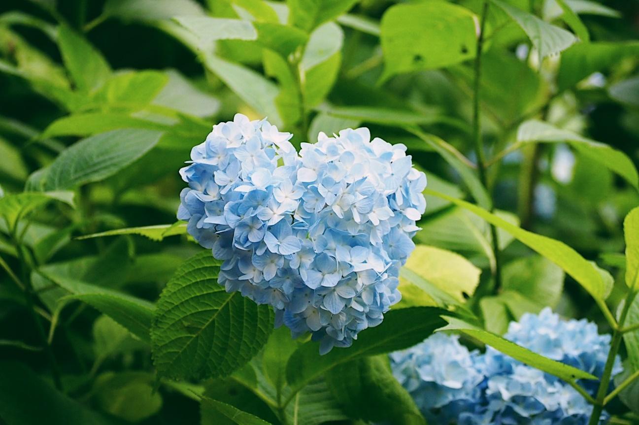 花が咲いている植物  自動的に生成された説明