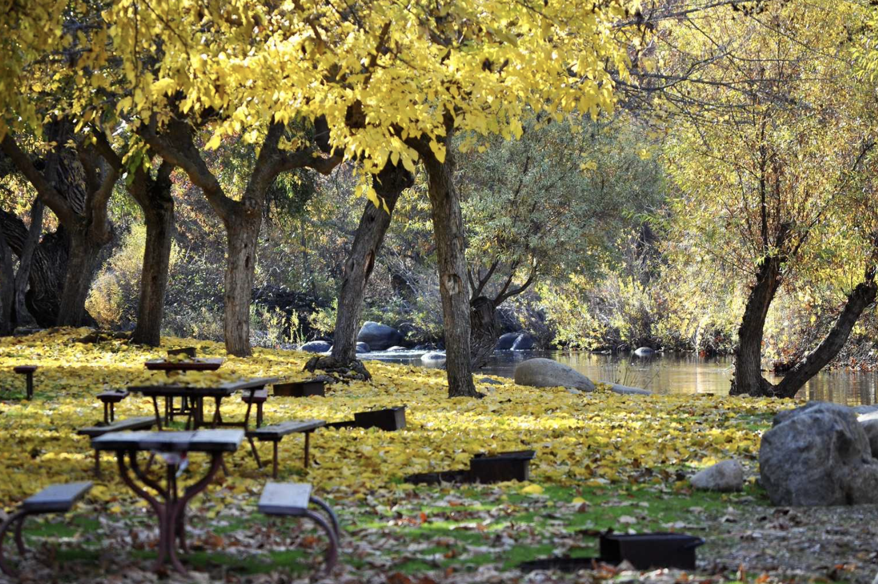 Picnic tables in woods with yellow leaves on the ground at campground.