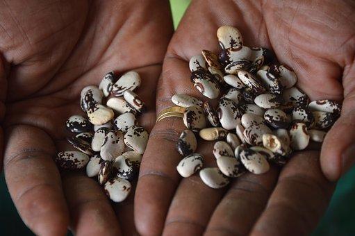 Biodiversity, Seeds, Bean, Lima, Nature