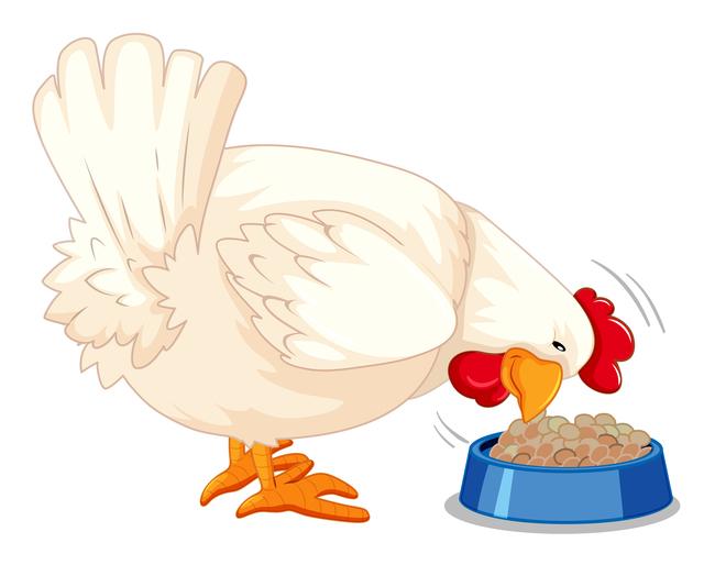 鶏の健康促進!飼料のビターゼにはどんな効果があるの?