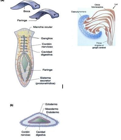 Cuaderno biología Carmen Sgdo 518: PRÁCTICA EXPERIMENTAL 1
