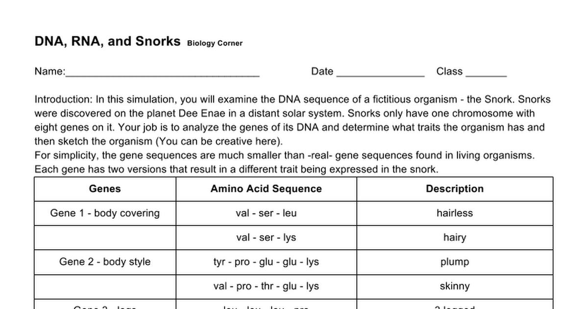 DNA, RNA and Snorks - Google Docs
