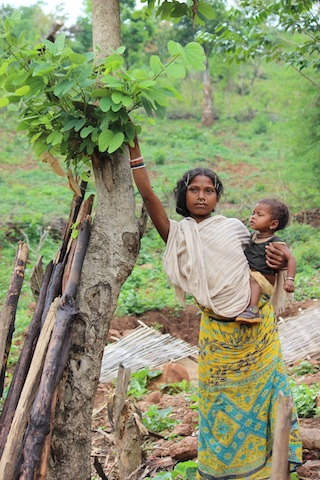 Here, a Dongria Kondh woman reaches for barada leaves, a vital source of iron for the community. Credit: Manipadma Jena/IPS
