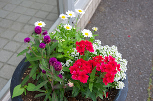 構内を飾る花