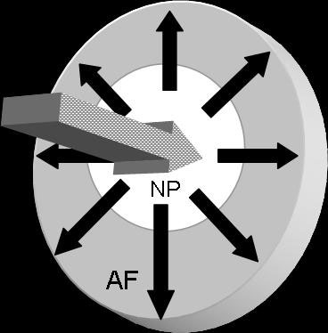The nucleus (NP) transmits the forces radially across the disk to the annulus fibrosus (AF)