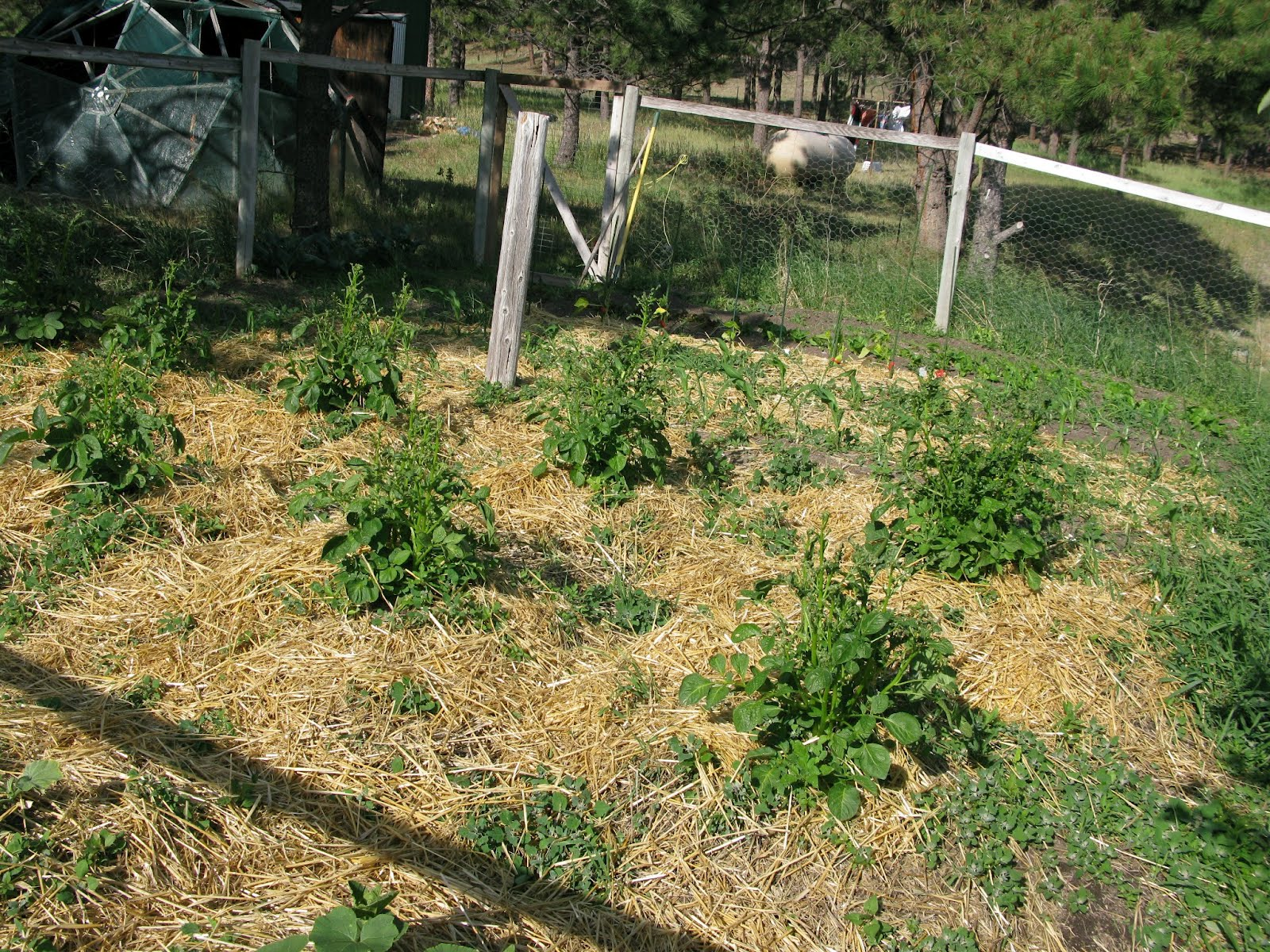 Garden plot on the high plains of Colorado