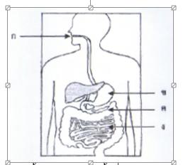 ว 1.1 ม.2/1 การย่อยแป้งด้วยด้วยอะไมเลสแล้วได้น้ำตาลกลูโคส เกิดขึ้นที่ส่วนใดของทางเดินอาหาร