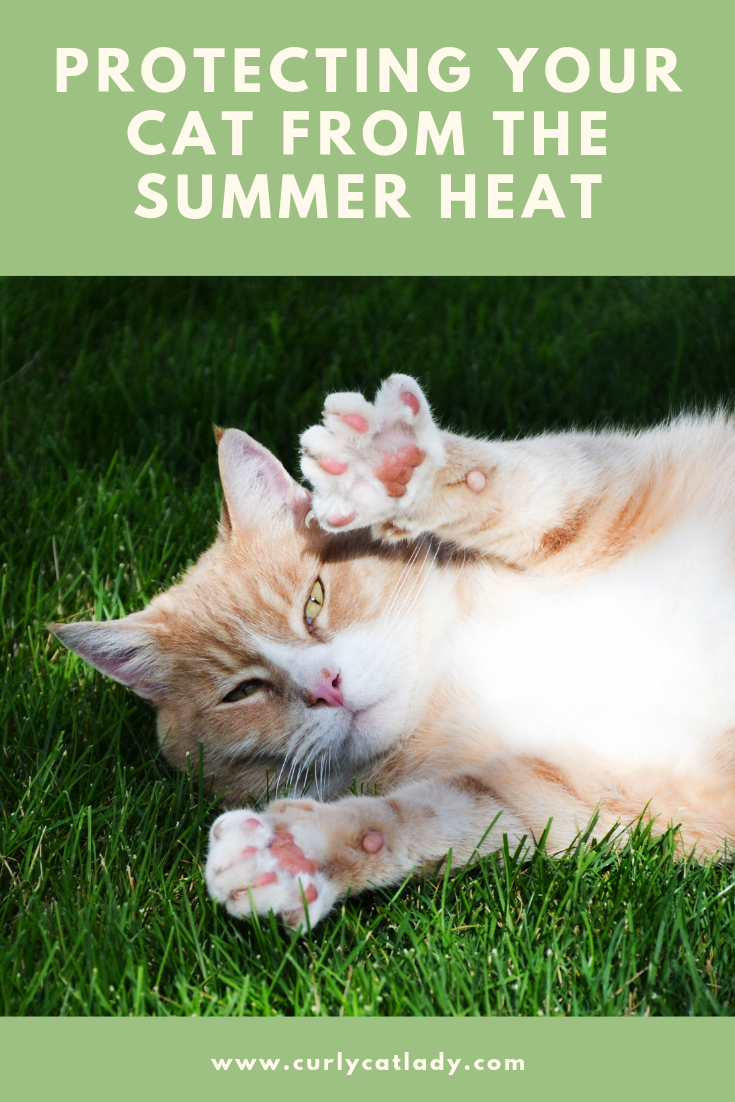 Protecting your cat from the summer heat pinterest graphic