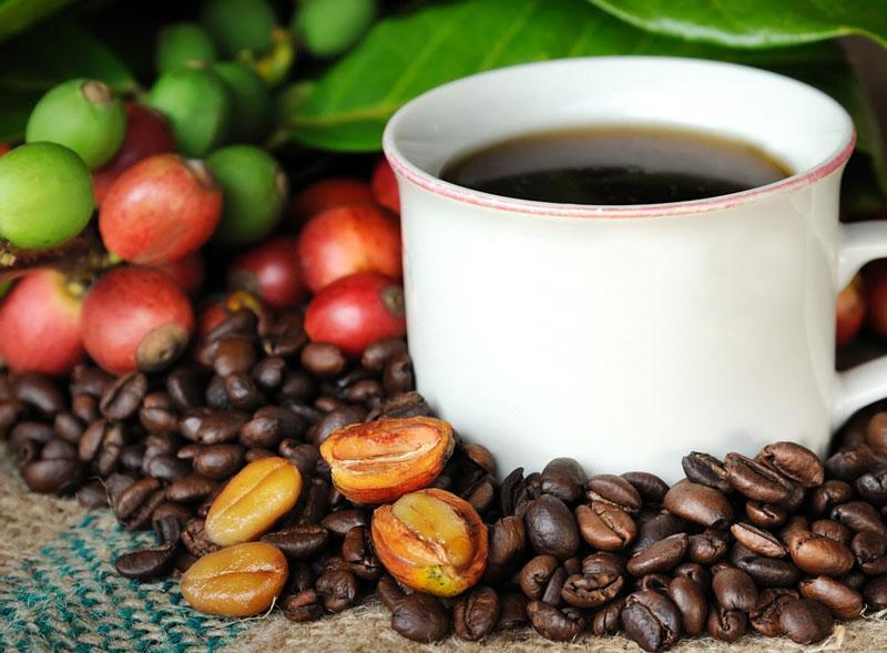 Có rất nhiều dòng cà phê đa dạng trên thế giới