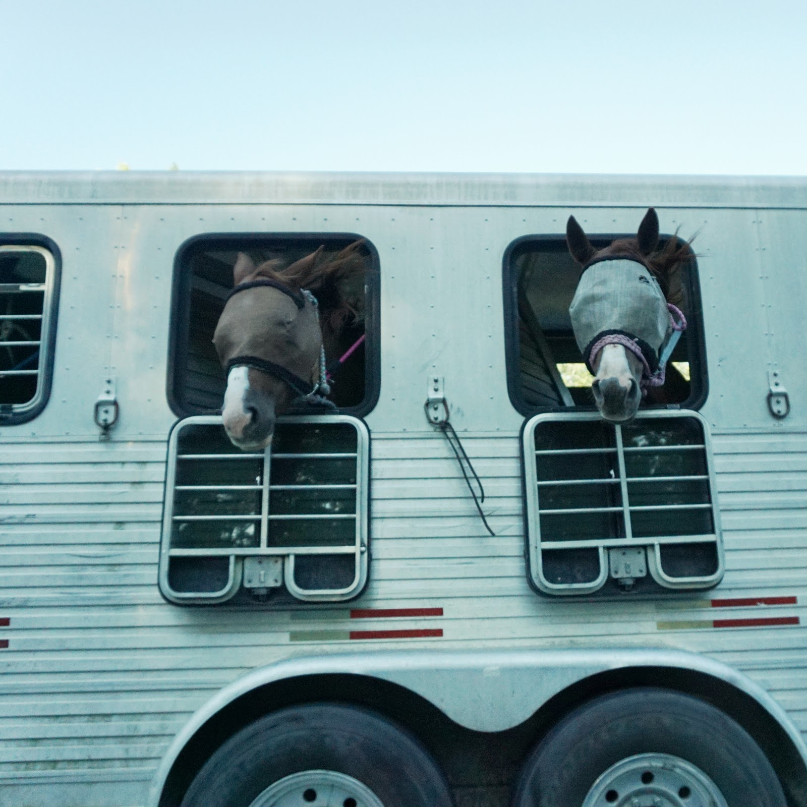 Horses with Fly Masks