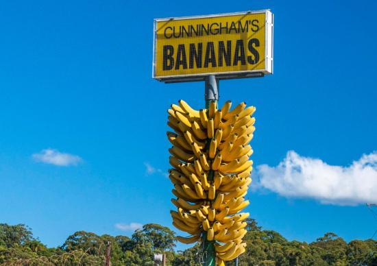 the Big Bunch of Bananas