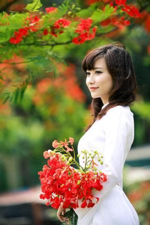 Image result for mùa hoa đỏ