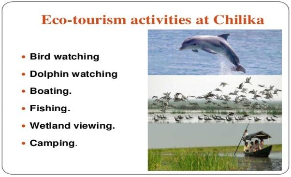 Image result for chilika lake birds and dolphin