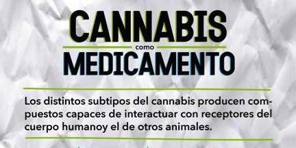 Cannabis como medicamento 2