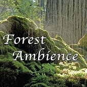 Relaxing Rainforest Ambience at Dawn for Deep Meditation, Reiki