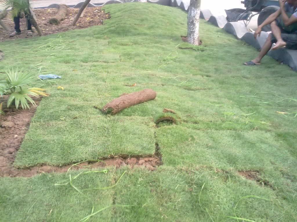 Dịch vụ trồng cỏ ở Long An cực kỳ chất lượng