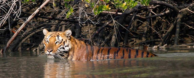 Image result for sundarbans national park west bengal