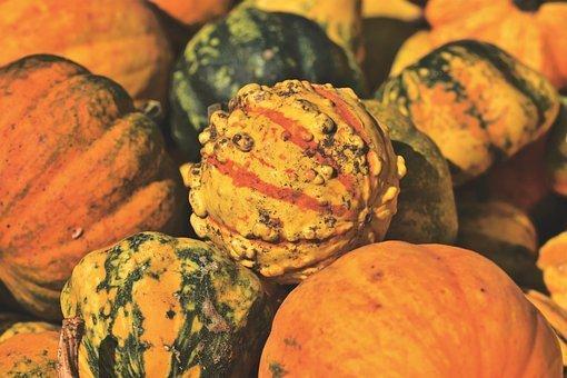 Pumpkins, Squash, Produce, Harvest