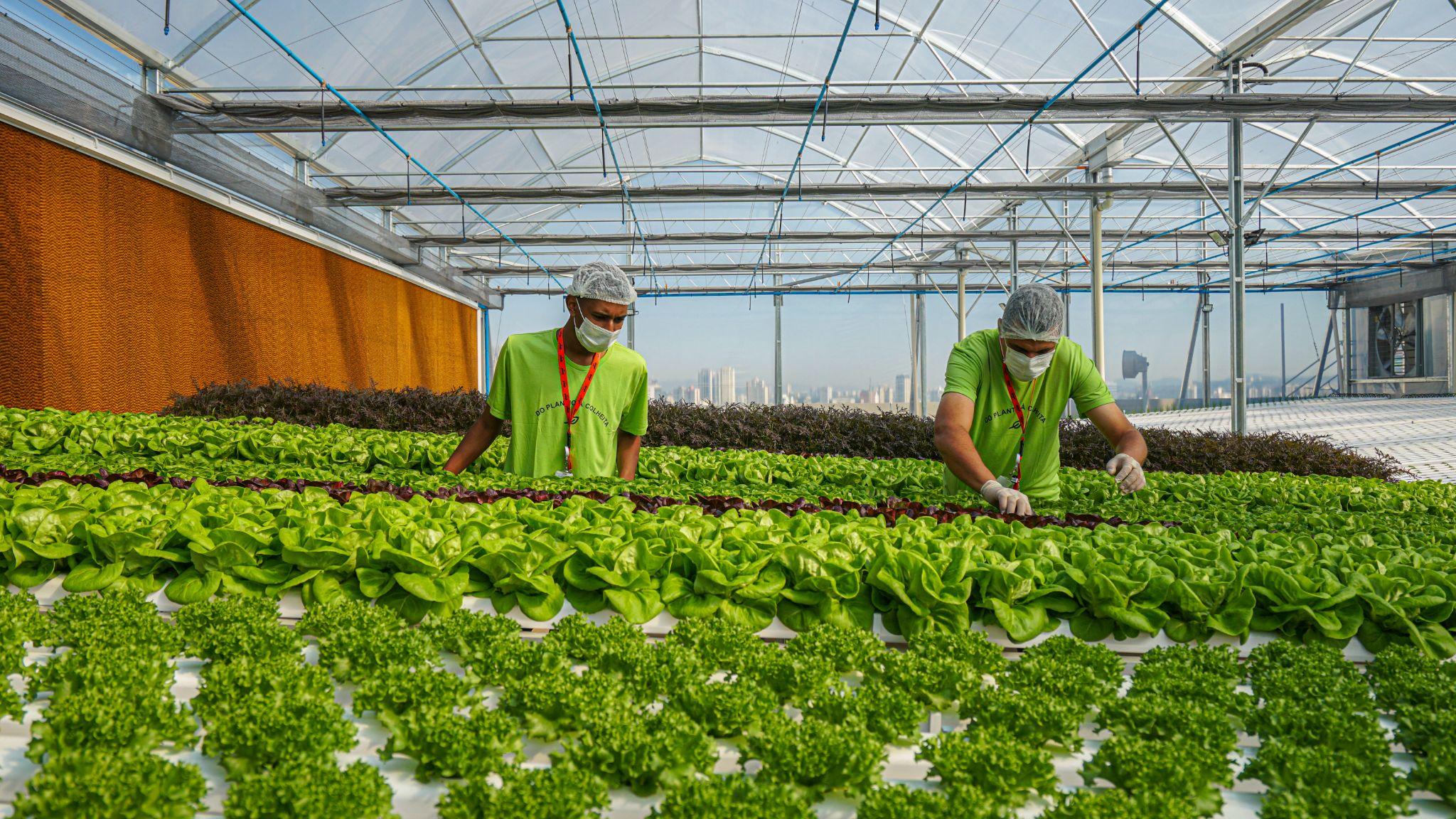 fazenda urbana do ifood, em osasco, no interior de são paulo.
