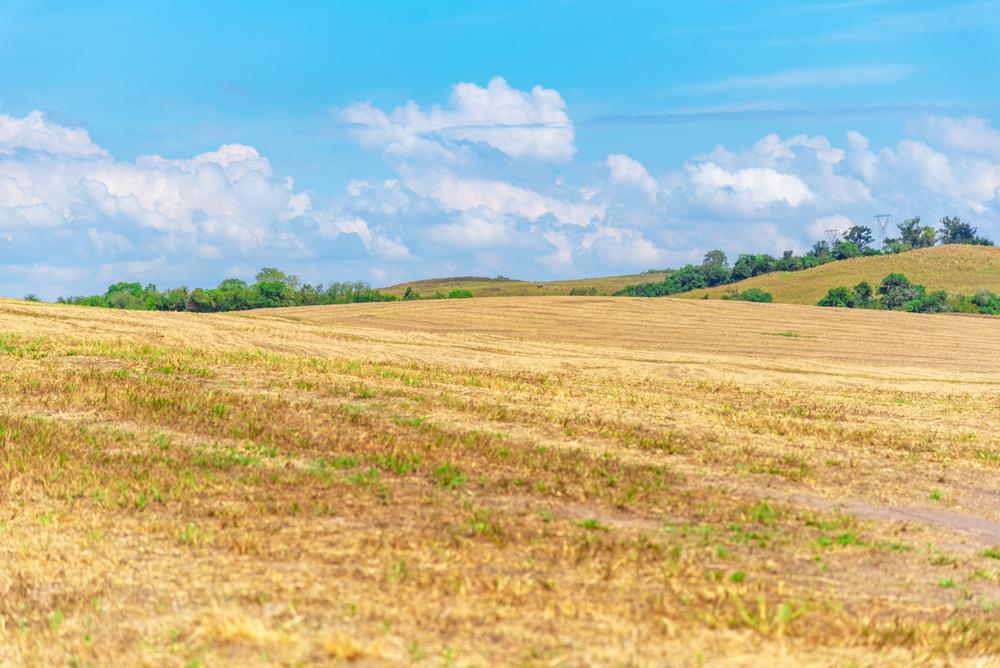Sojicultores gaúchos sofrem com a estiagem e ainda não terminaram de plantar toda a área prevista para essa safra. (Fonte: Shutterstock)