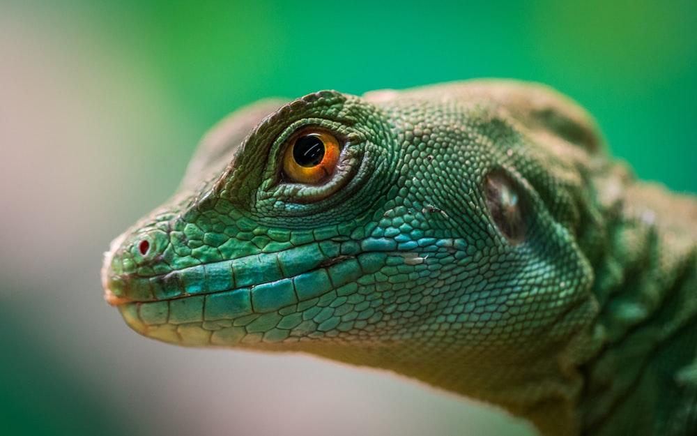 a green lizard taken on the best camera for travel blogging