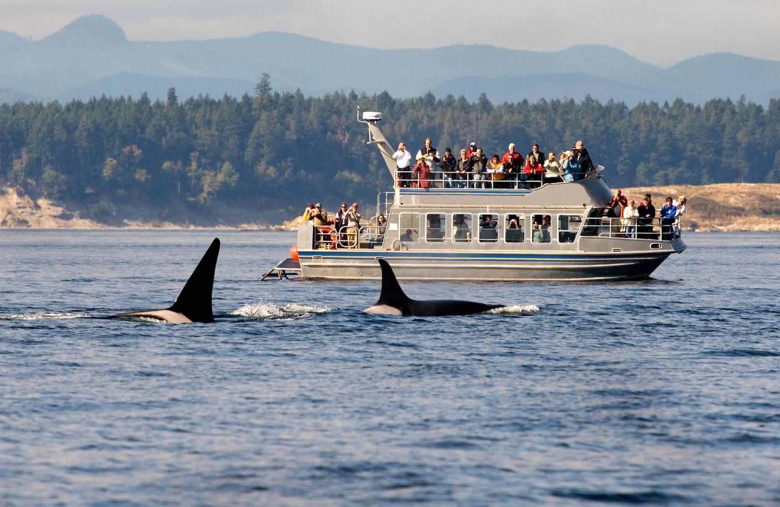 Наблюдение за китами в Ванкувере