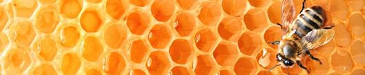 Veste, kakšen med jeste?