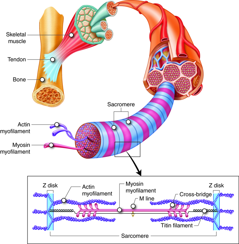 Grant Anatomy and Physiology: January 2018