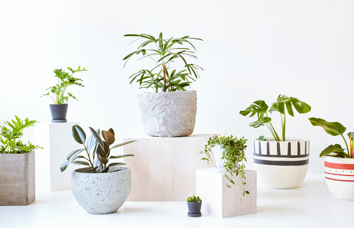 Indoor plants.jpg
