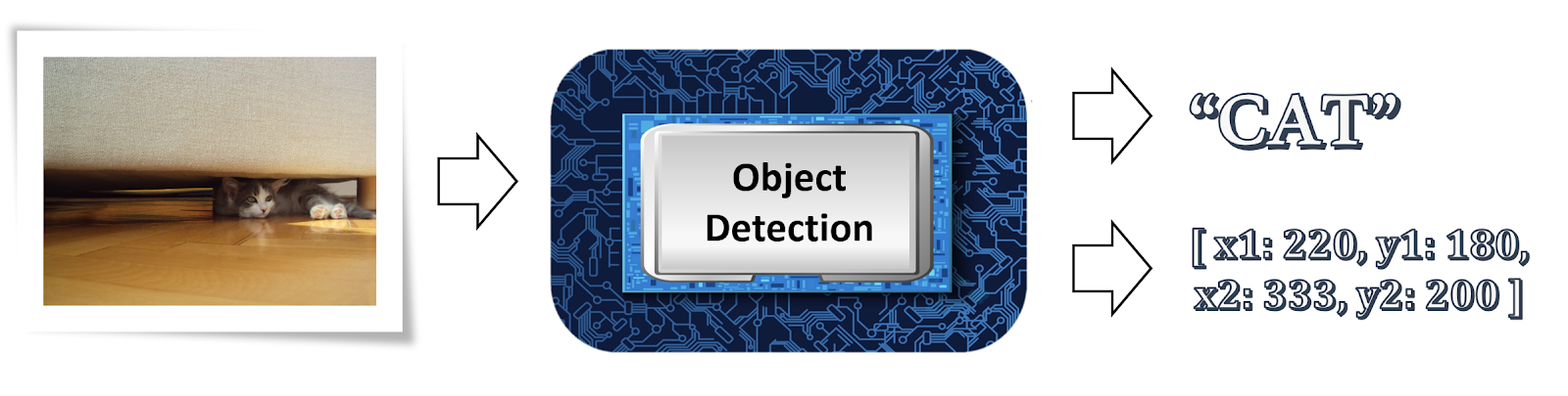 Object detection cat