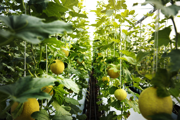 citrons bios