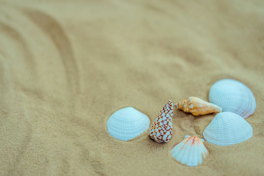 Best Shelling Beaches in Naples, Florida