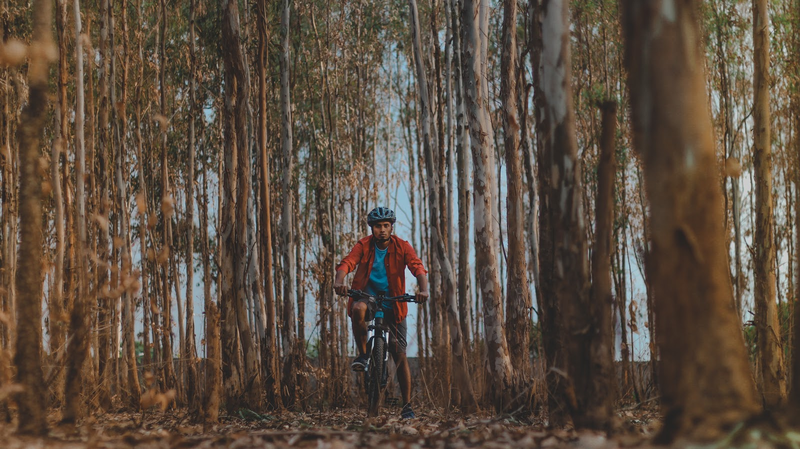 The turahalli forest cycling route. Turahalli trekking. Check out coppernicus.com for more information